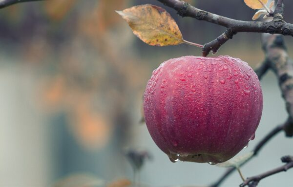 apple, water droplets, fruit